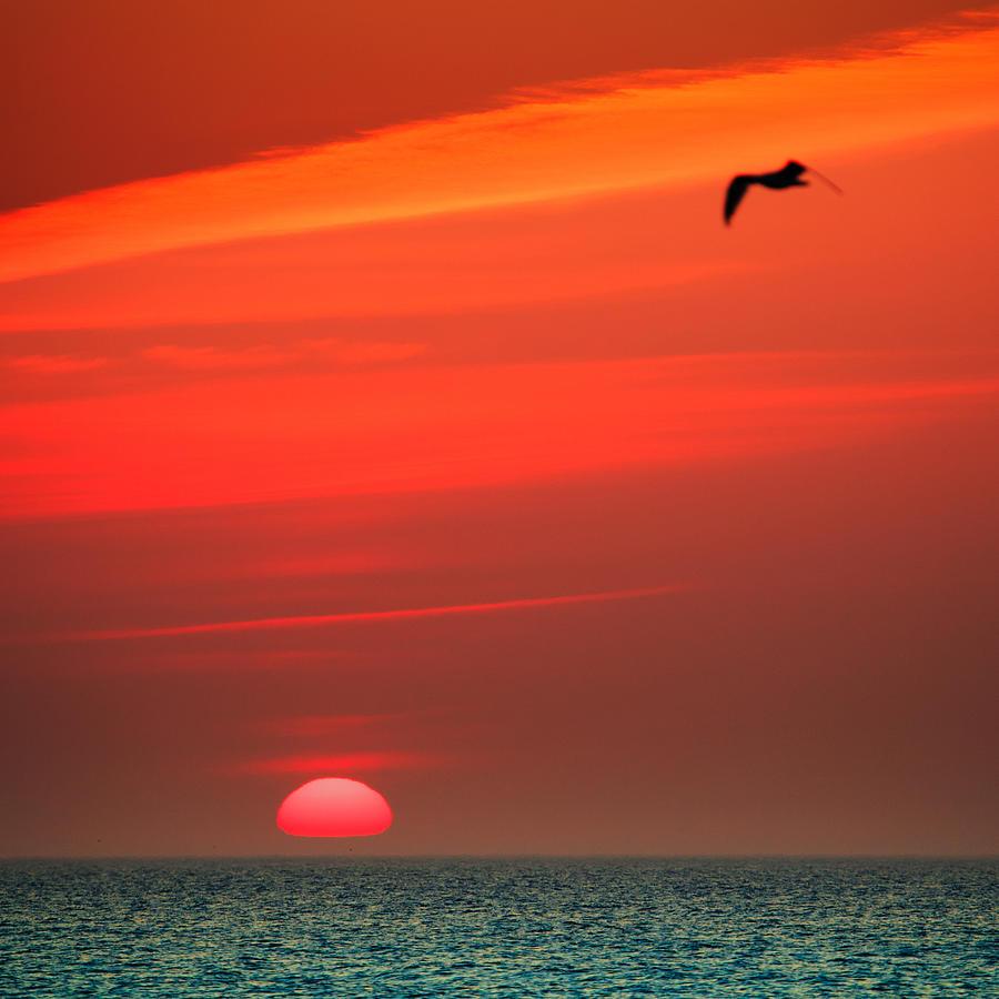 Sun Is Up Photograph - Sun Is Up by Dapixara Art
