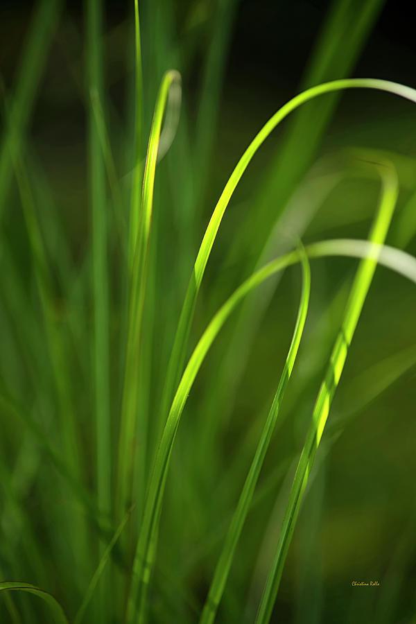 Green Photograph - Sun-kissed Grass by Christina Rollo