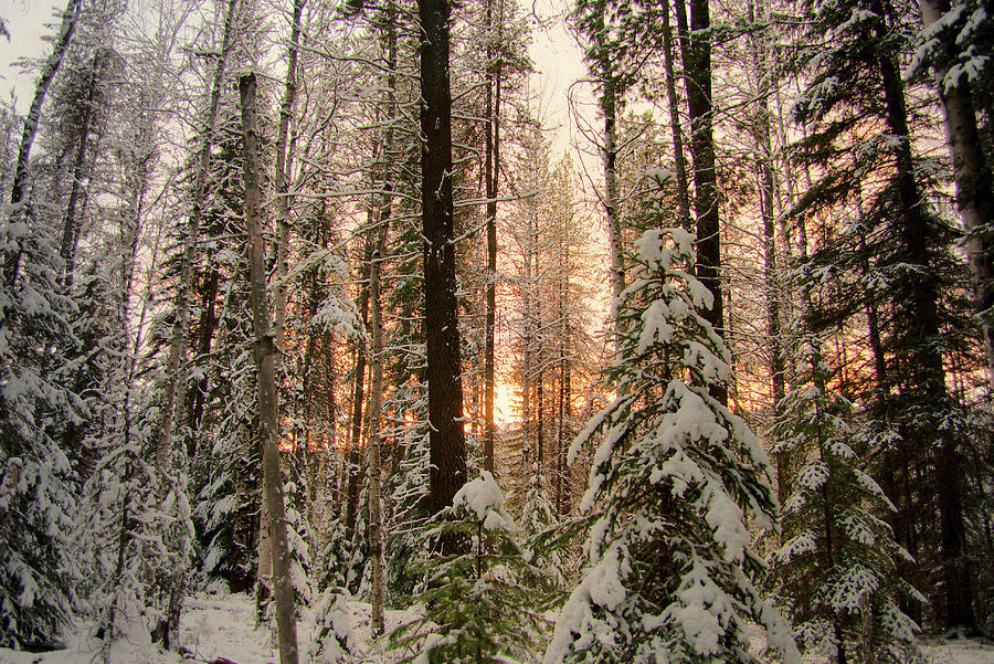 Sun of Winter Trees by Troy Stapek