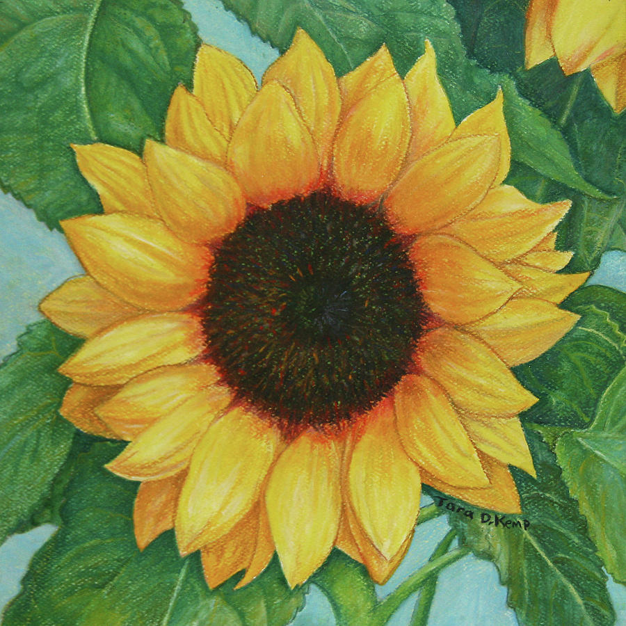 Sunflower Painting - Sun One by Tara D Kemp