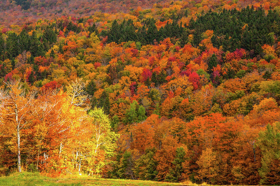 Vermont Fall Foliage Photograph - Sun Peeking Through by Jeff Folger
