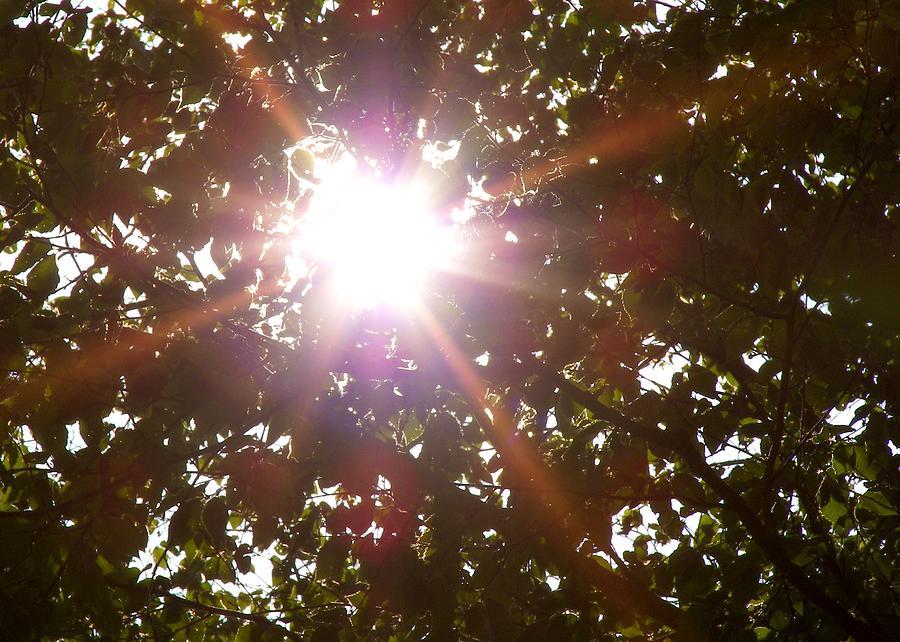 Sun Photograph - Sun Rays by JAMART Photography