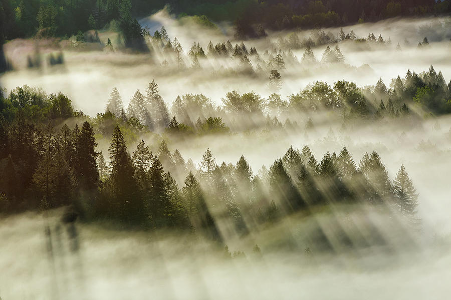 Sun Photograph - Sun Rays Over Foggy Oregon Forest by David Gn