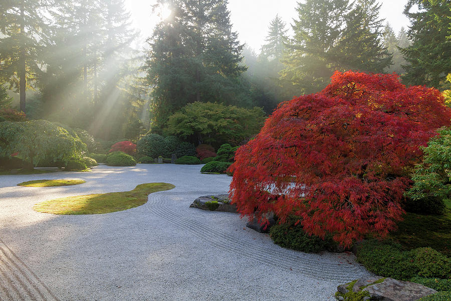 Japanese Photograph - Sun Rays over Japanese Flat Sand Garden in Autumn by David Gn