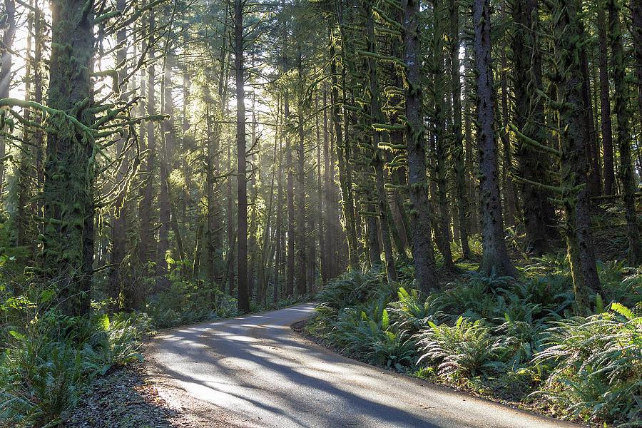 Sun Photograph - Sun Rays Through The Forest by David Gn