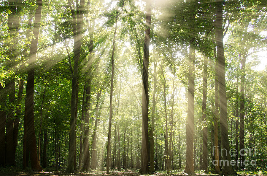Sun Photograph - Sun Rays Through Treetops Rural Landscape by Melissa Fague