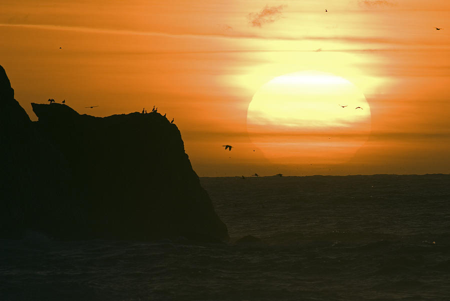 Sunsets Photograph - Sun Setting With Flying Birds by Rich Reid