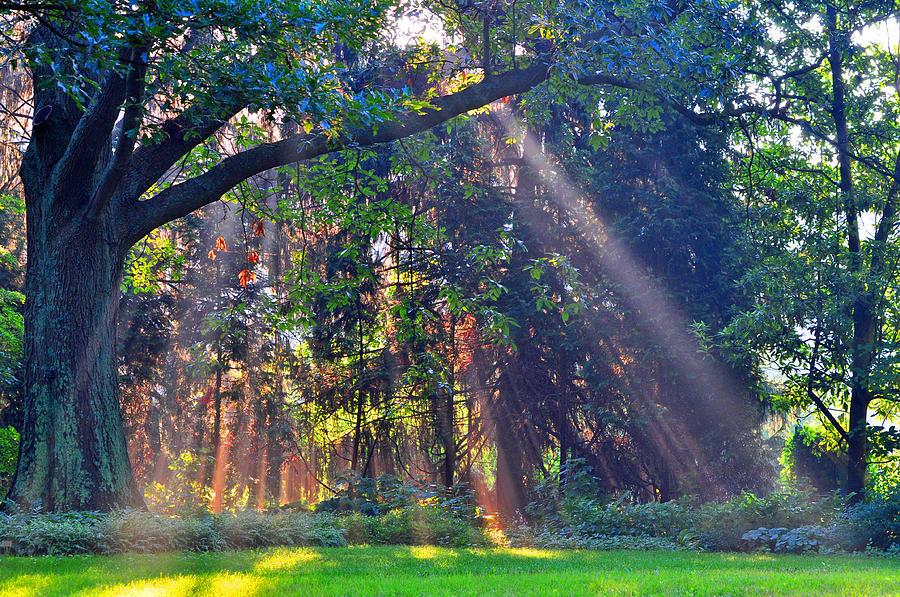 Landscape Photograph - Sun Shower B by Peter  McIntosh