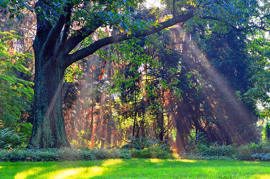 Landscape Photograph - Sun Shower C by Peter  McIntosh