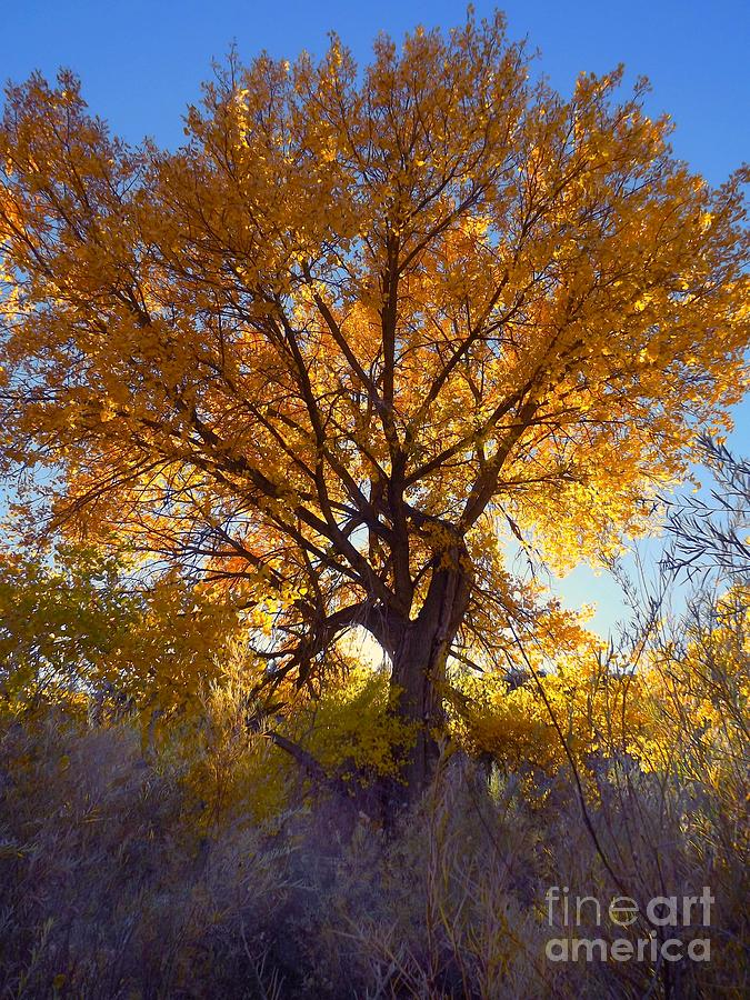 Sun Through Golden Leaves Digital Art by Annie Gibbons