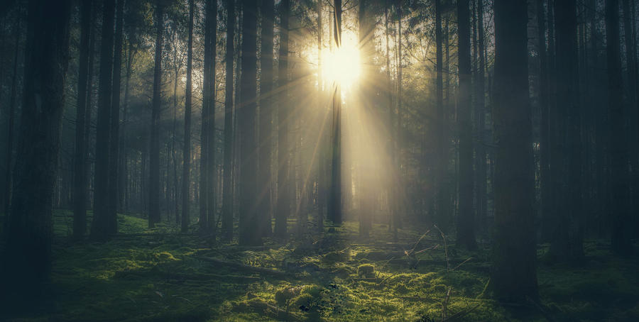 Forest Photograph - Sun trough the trees by Joost Lagerweij