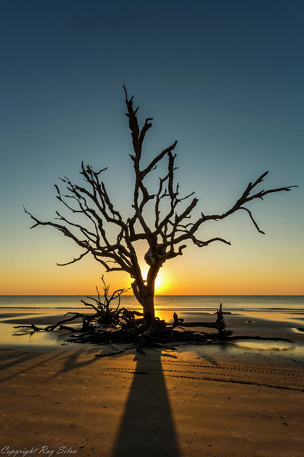 Jekyll Photograph - Sun-up by Ray Silva