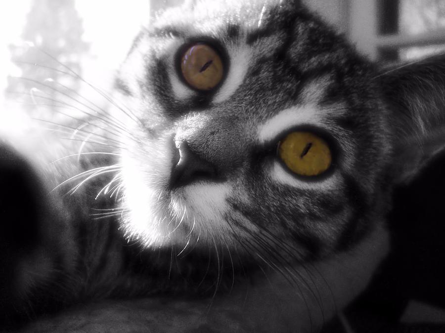 Cat Photograph - Sunbather by JAMART Photography