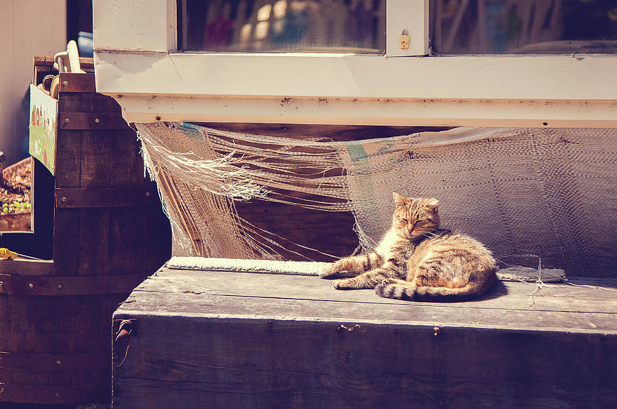 Cat Photograph - Sunbather by Kristy Creighton