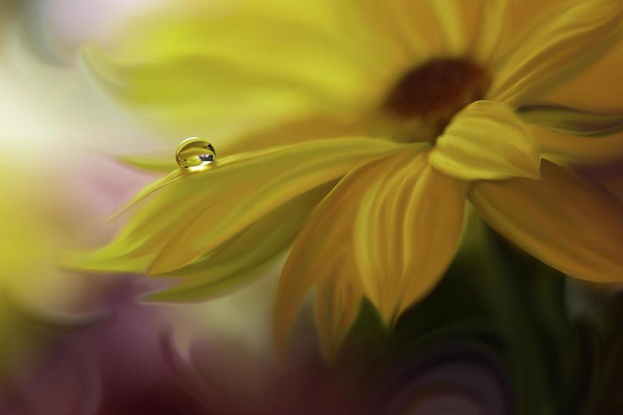 Aesthetic Photograph - Sunbeam... by Juliana Nan