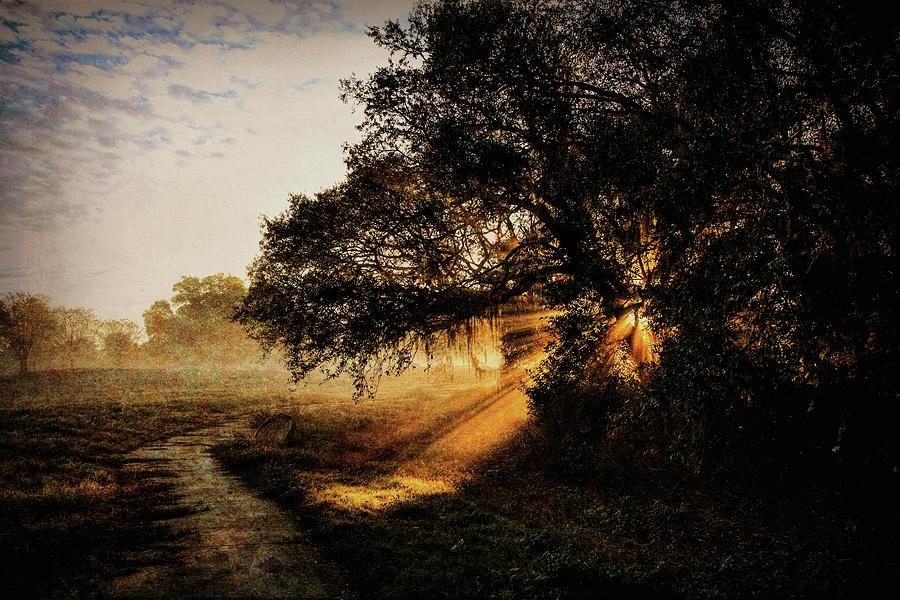 Sunbeam Sunrise by Pete Rems