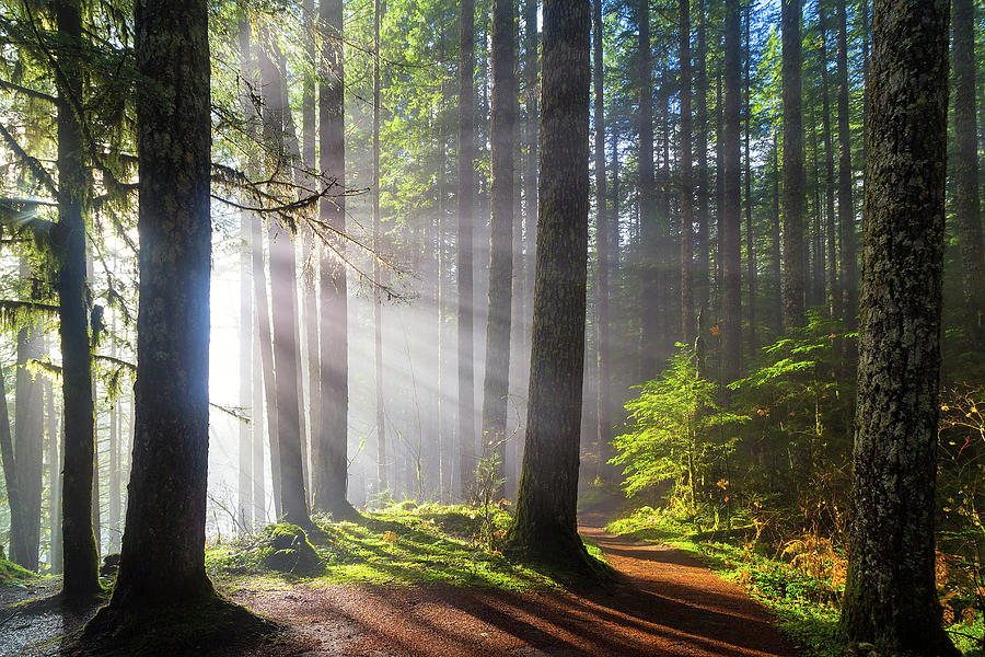 Park Photograph - Sunbeams Along Hiking Trails by David Gn