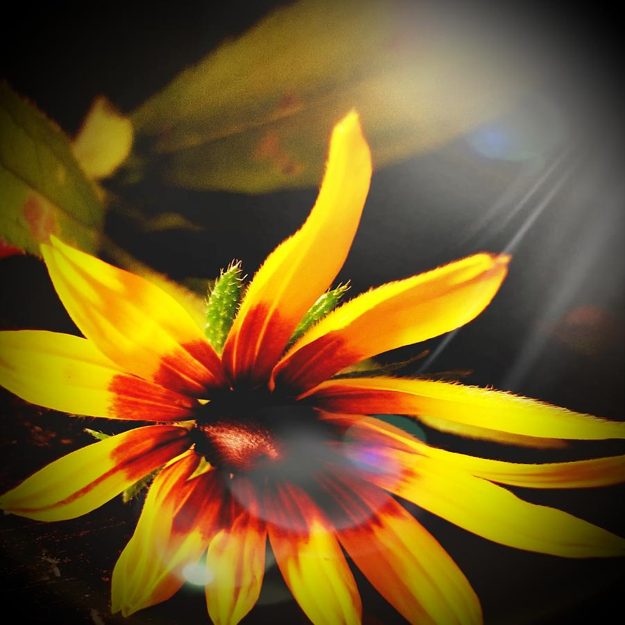 Flower Digital Art - Sunburnt  by Katie Irwin Flather