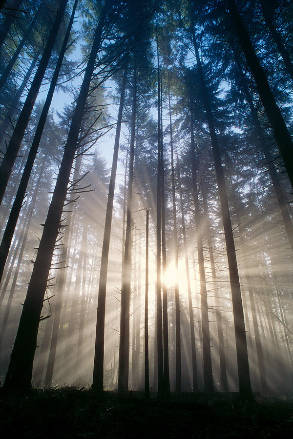 Bare Photograph - Sunburst In The Forest by Greg Vaughn - Printscapes