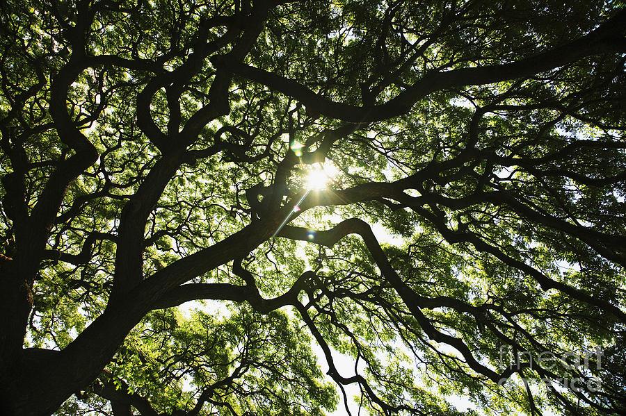 Above Photograph - Sunburst Through Tree by Brandon Tabiolo - Printscapes