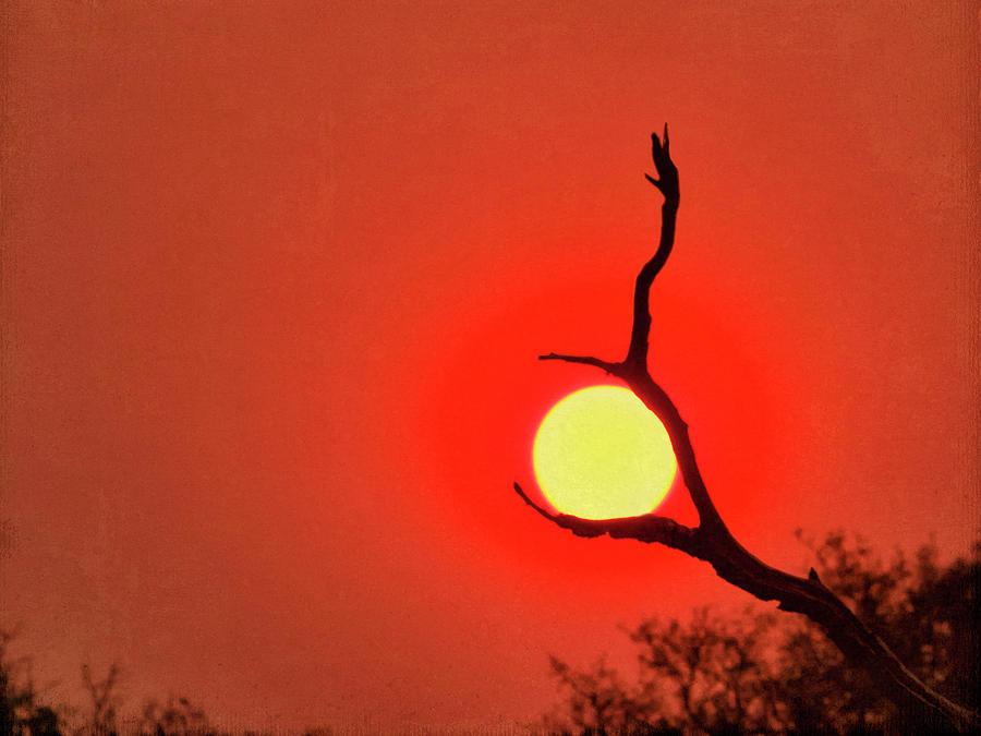 Suncatcher by Dianna Lynn Walker