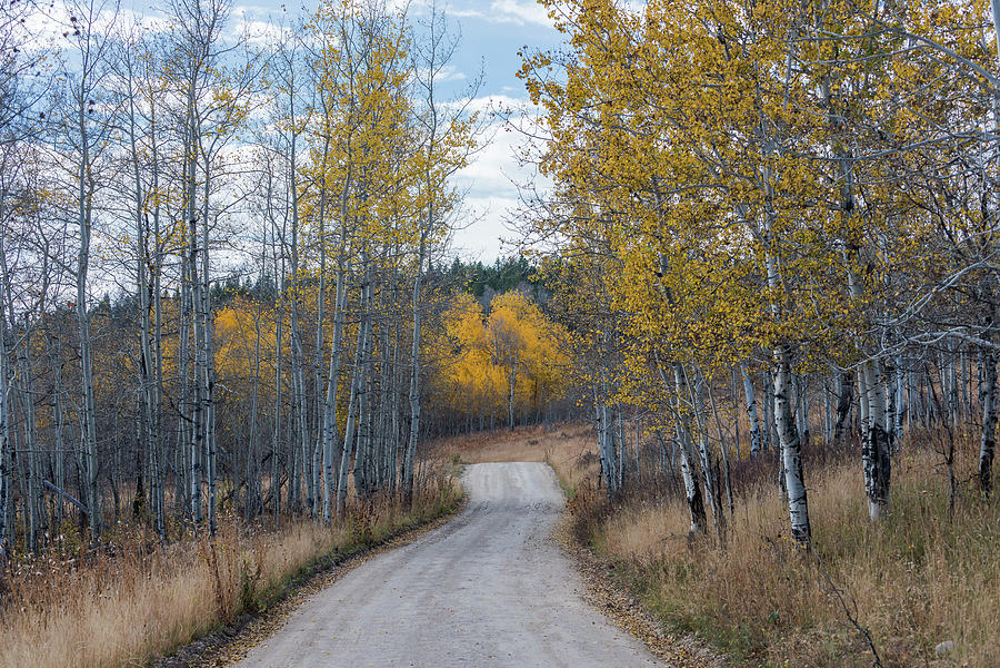 Sunday Drive by Chuck Jason