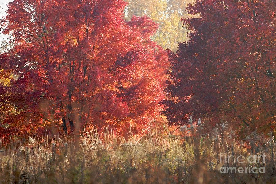 Autumn Photograph - Sundown by Hideaki Sakurai
