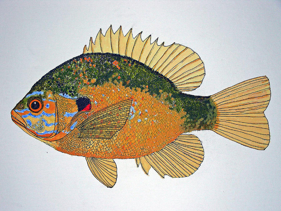 Sunfish South Usa Painting by Don Seago