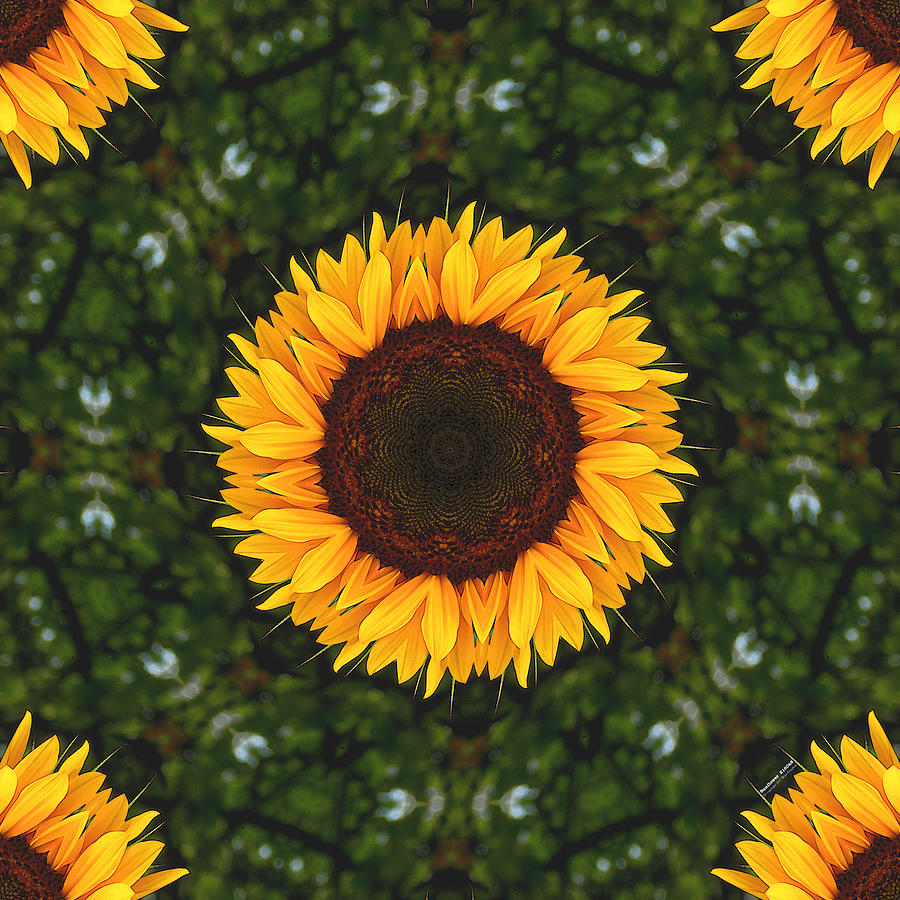 Sunflower Digital Art - Sunflower 2160k8 by Brian Gryphon