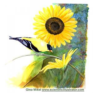 Birds Painting - Sunflower And Goldfinch by Gina Mikel