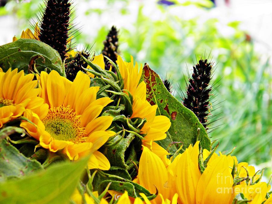 Sunflower Photograph - Sunflower Bouquet 2 by Sarah Loft