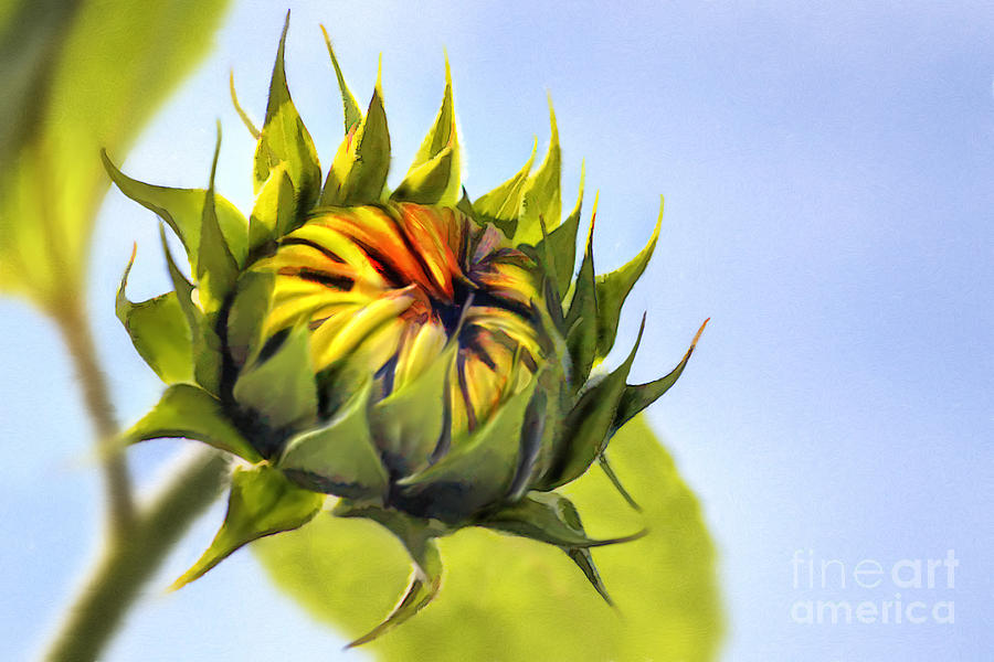 Yellow Digital Art - Sunflower Bud by John Edwards