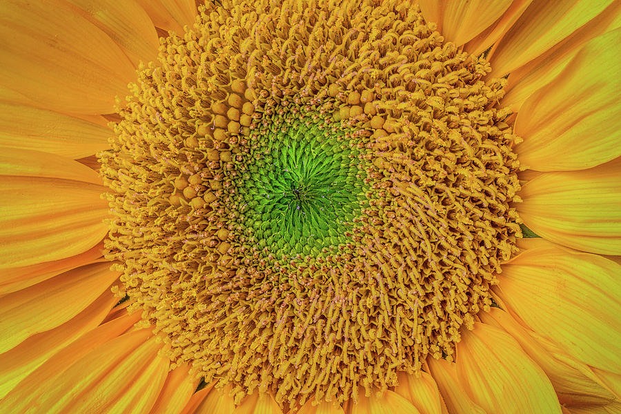 Mood Photograph - Sunflower Detail by Garry Gay