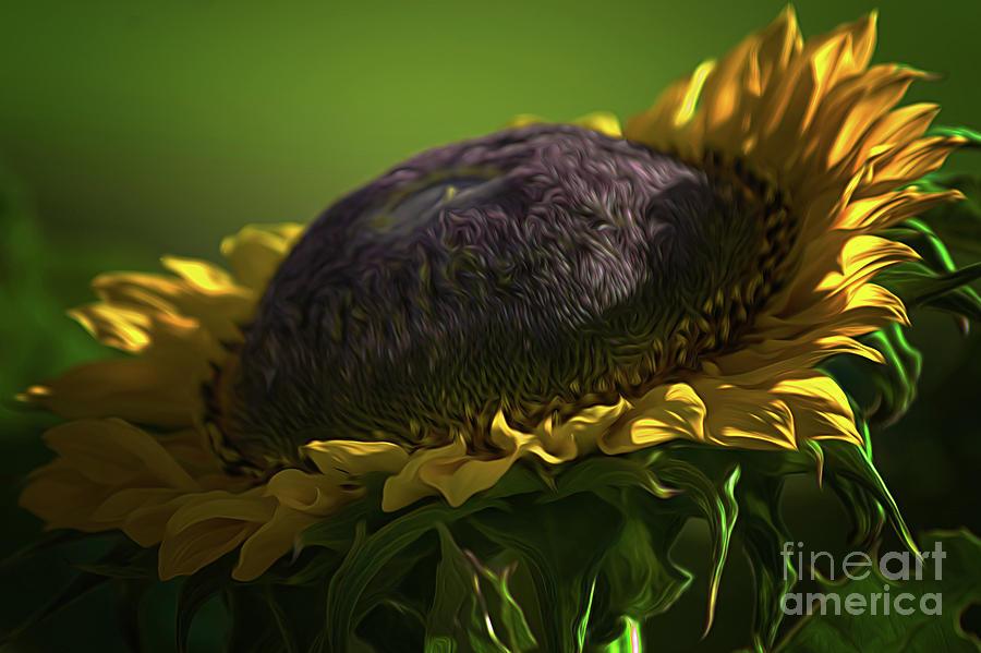 Sunflower Photograph - Sunflower by Gaby Swanson