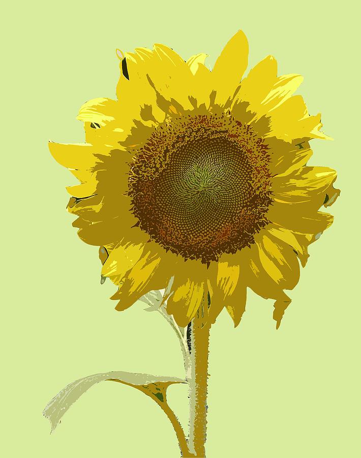 Sunflower Digital Art by Karen Nicholson