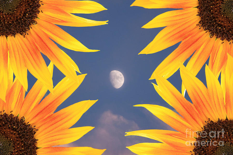 Sunflower Photograph - Sunflower Moon by James BO  Insogna