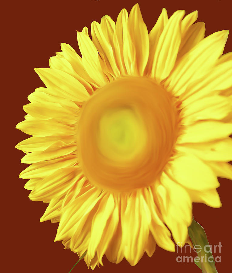 Sunflower Painted Version 1 by Chandra Nyleen