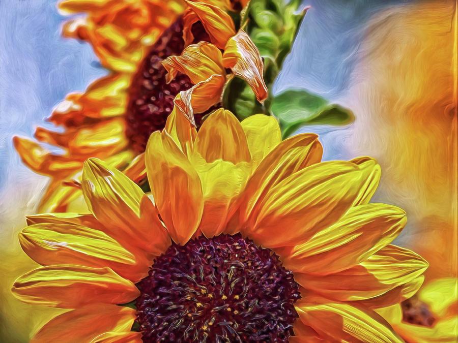 Sunflower Risen Digital Art by Doctor MEHTA
