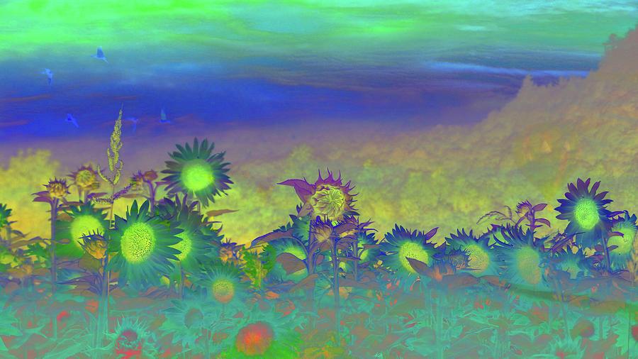 Sunflower Serenade Photograph