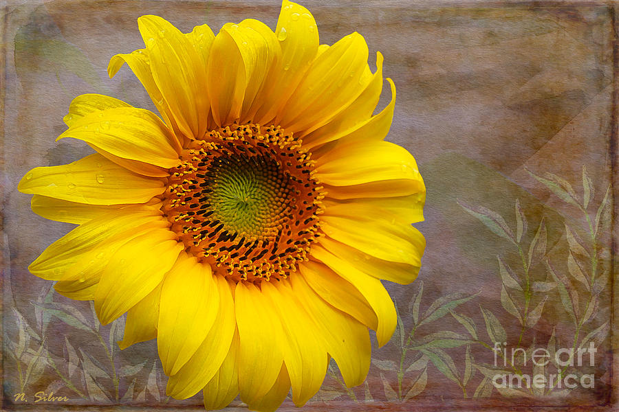 Painterly Photograph - Sunflower Serenade by Nina Silver