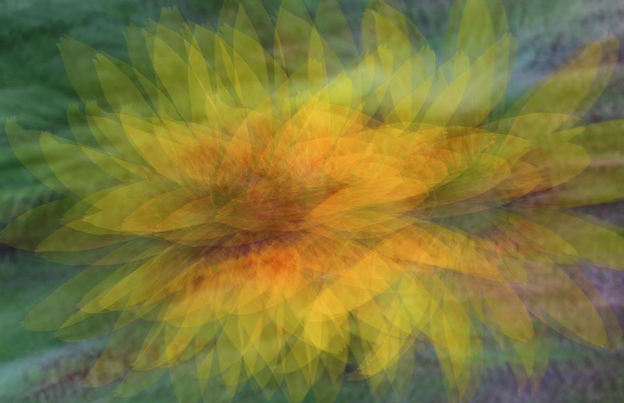 SUNFLOWER SHIMMY by Deborah Hughes
