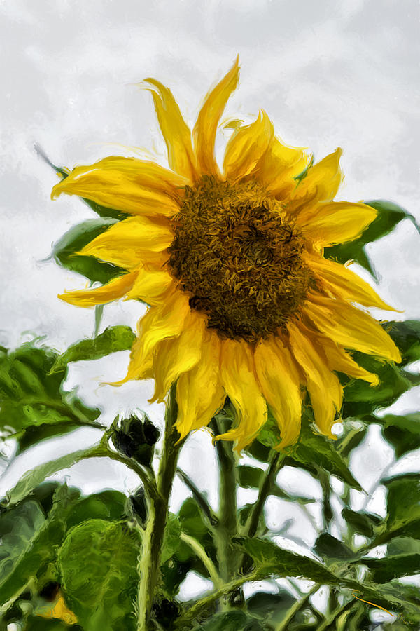 Sunflower by SM Shahrokni