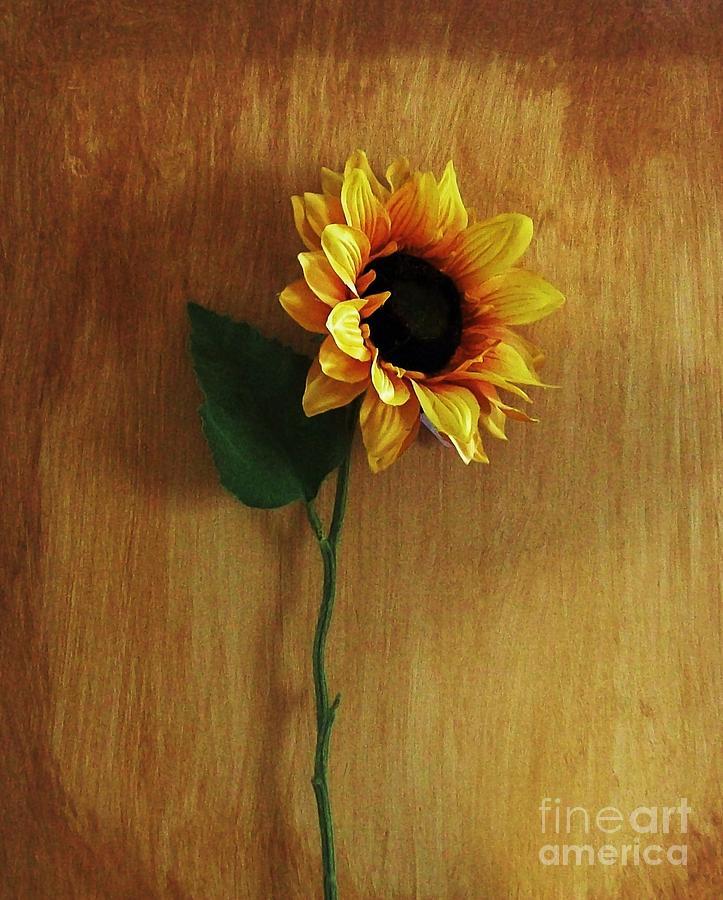 Sunflower Photograph - Sunflower Standing by Marsha Heiken