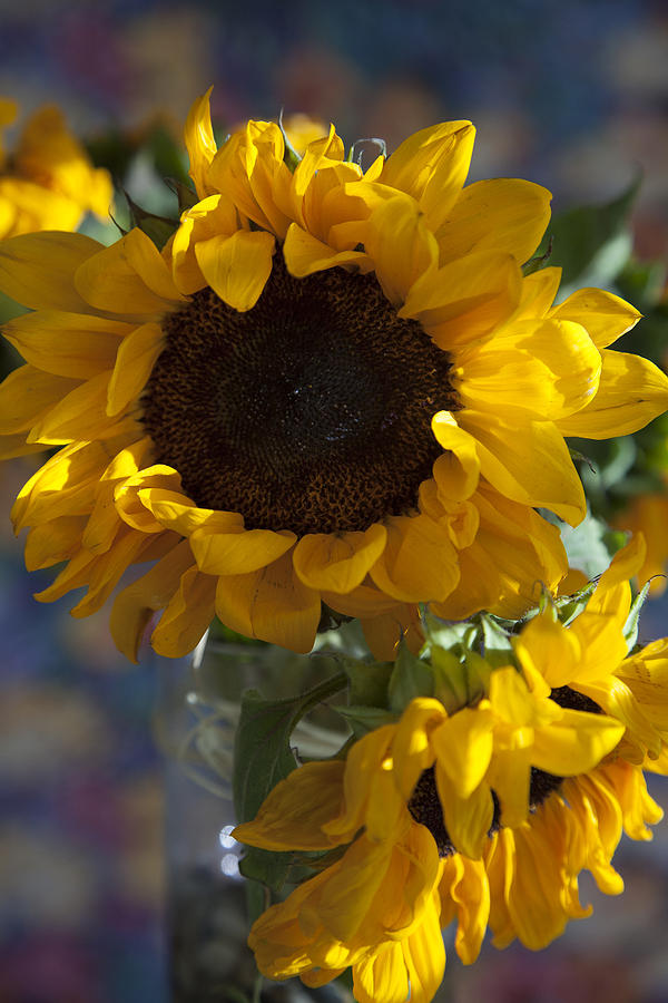 Sunflower Still Life Photograph By Greg Kopriva