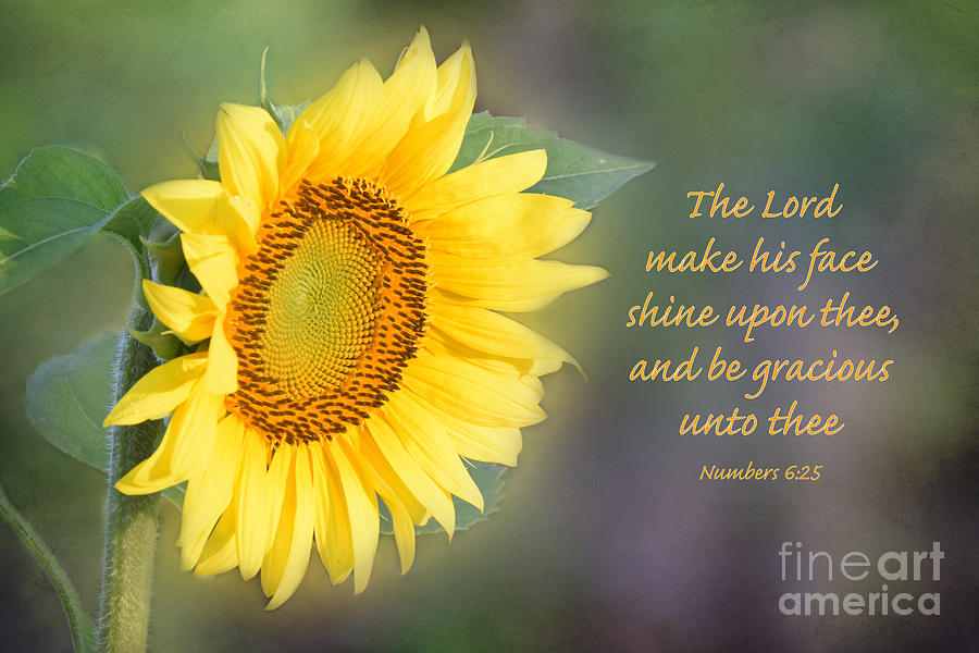 Sunflower With Bible Verse Photograph By Deborah Berry