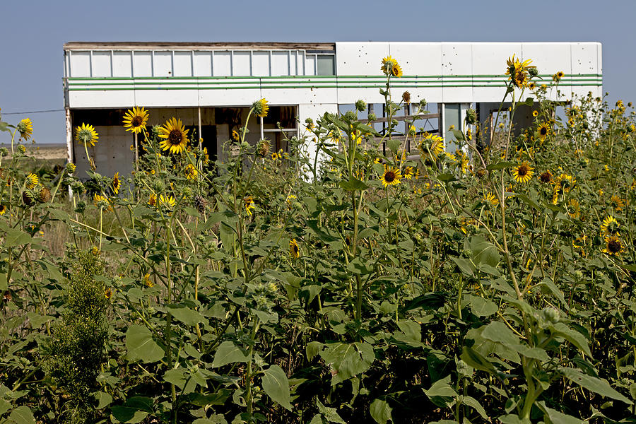 Route 66 Photograph - Sunflowers And Abandoned Gas Station by Rick Pisio
