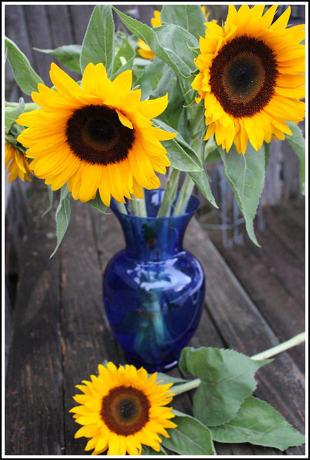 Sunflowers And Blue Vase