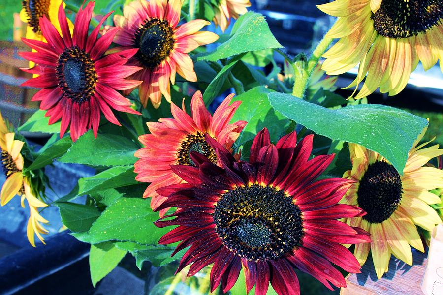 Sunflowers Photograph - Sunflowers At A Fair by Rick Cheadle
