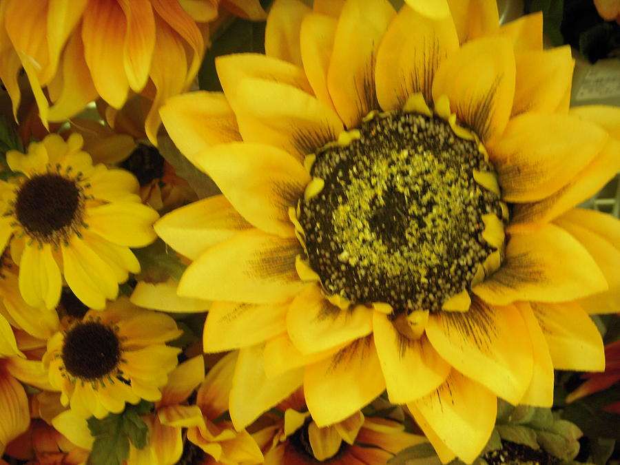 Sunflowers Photograph - Sunflowers by Deborah Finley
