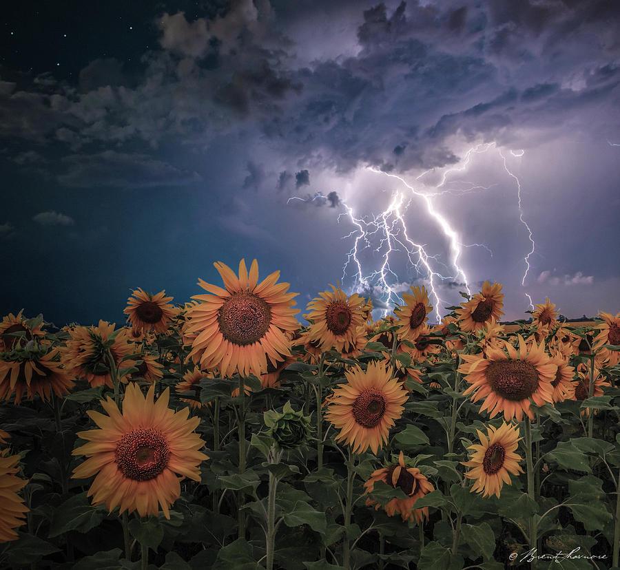 Sunflowers In Adversity Digital Art by Brent Shavnore